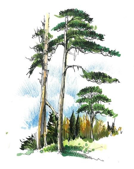 新青年与手绘表达5 | 风景园林新青年