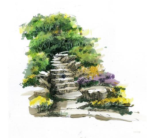 风景园林植物手绘图片
