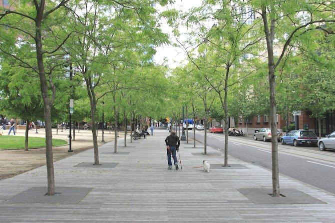 作为整个场地右侧边界的散步道,木质平台和钢质的书池篦子以及大树形成了美好的散步环境。(Photocredit: 周啸)