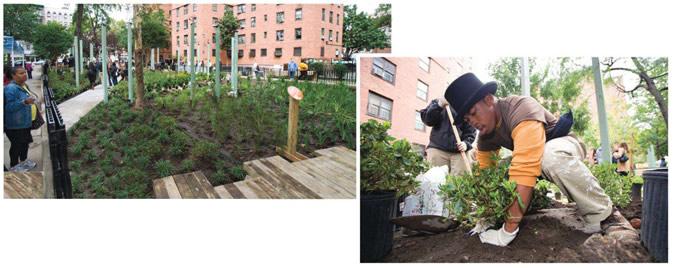 """木栈道:一条木栈道横贯雨水花园。志愿者:兵团网和它在纽约的合作伙伴""""绿色力量""""组织和培训了志愿者,经常来种植和维护种植园。"""