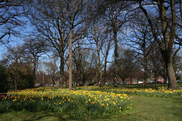 图1:基督城中心的海格利公园(Hagley park)(Maria E.Ignatieva 摄影)
