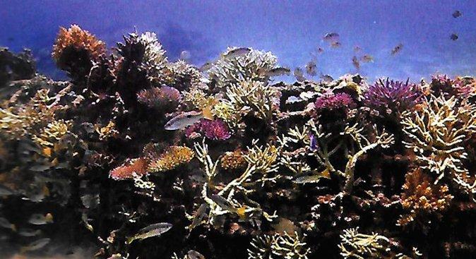 reefs-off-the-shelf-10