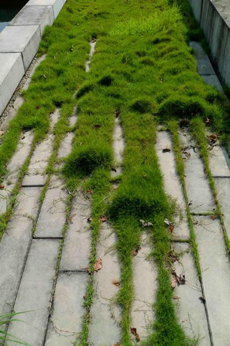 图4 预制混凝土铺装与野草结合 张海
