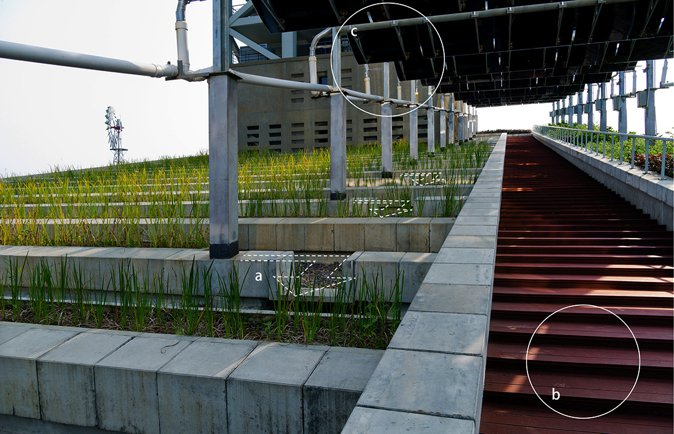 图9 人造屋顶湿地图解:1,收集的雨水沿着设计路径流经萱草根部,创造了曝氧、根系净化的可能;2,台阶提供观赏平台;3,太阳能板为抽水提供能源,同时具有遮阳的功能。 张唐景观