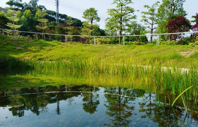 图10 雨水流经屋顶湿地,落入蓄水池,然后流入旁边的生态草沟 张海