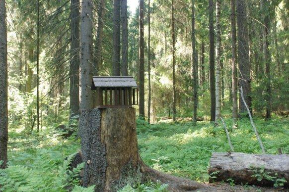 Komarowski保护区的人工鸟窝