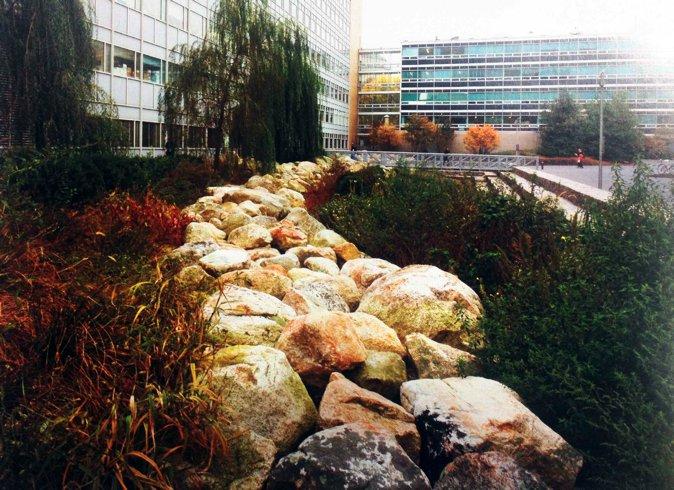 图五,MIT学生中心,由Laurie Olin设计的雨水花园(图片来自网络)