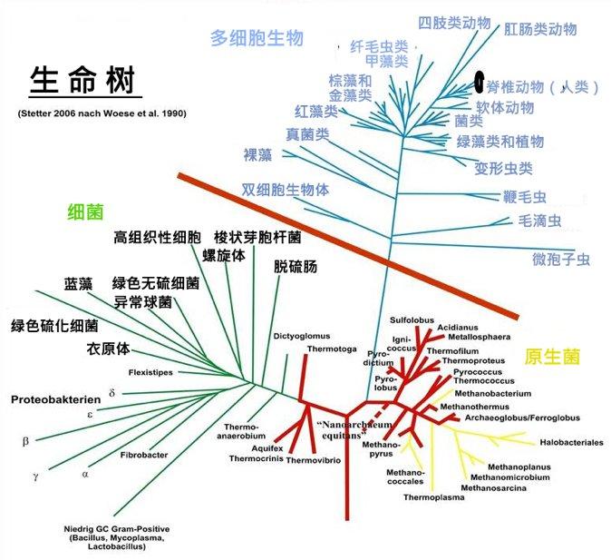 生命之树。多生物的存在(红线以上)完全取决于各种微生物和他们的丰富度之间的相互影响。但红线以下的微生物的生态学意义,普遍地被人们低估了。 (来自施德达,2011)