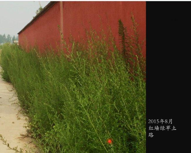 红墙绿草土路
