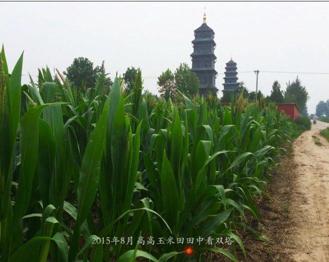 高高玉米田中看双塔