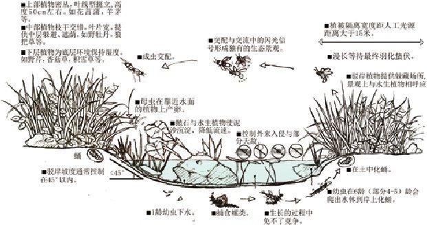 自然驳岸景观手绘图