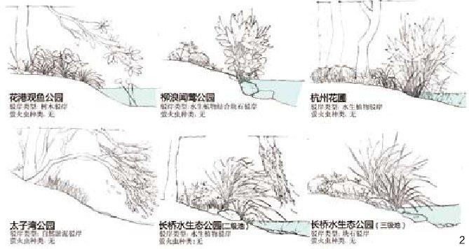 园林手绘水体线稿