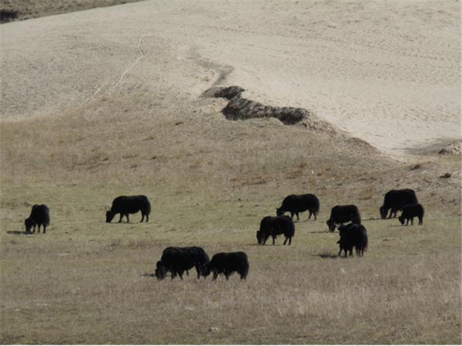 Image 7: 甘肃南部的过度放牧与土地沙漠化  Source: Hajo Mader