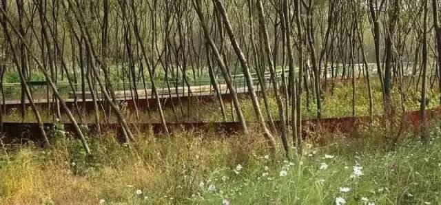 杭州江洋畈生态公园