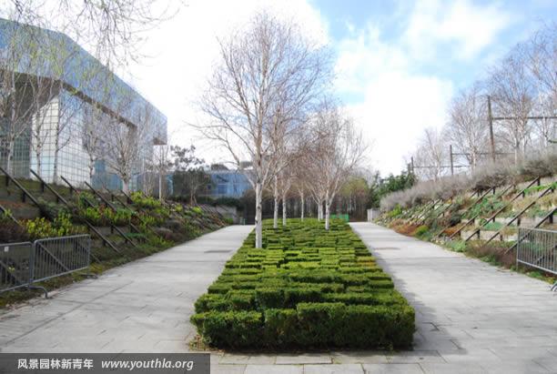图23 以黄杨绿块和桦树组合为中心的庭院